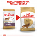 Royal Canin-Cocker Adulto (1)