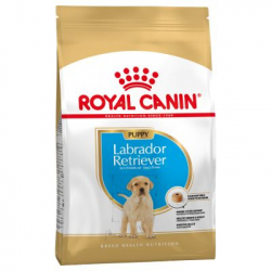 Royal Canin-Labrador Retriever Cachorro (1)