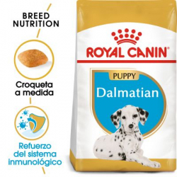 Royal Canin-Dalmata Cachorro (1)
