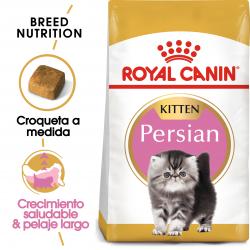 Persian Kitten (6)