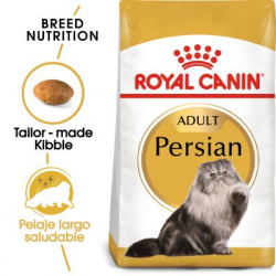 Persian Adulto (6)