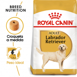 Royal Canin-Labrador Retriever Adulto (1)