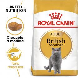 Royal Canin-British Shorthair Adulto (1)