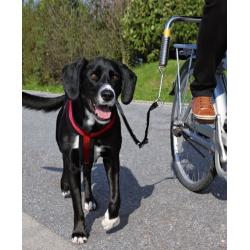 Set para Bicicleta Paseo para Perro (6)