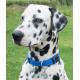 Collar Nylon Azul Turquesa para Perro (2)