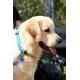 Collar Nylon Azul Turquesa para Perro (3)