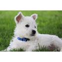 Collar Nylon Azul Oscuro para Perro (2)