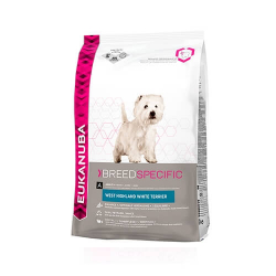 West Highland White Terrier Adulto (6)