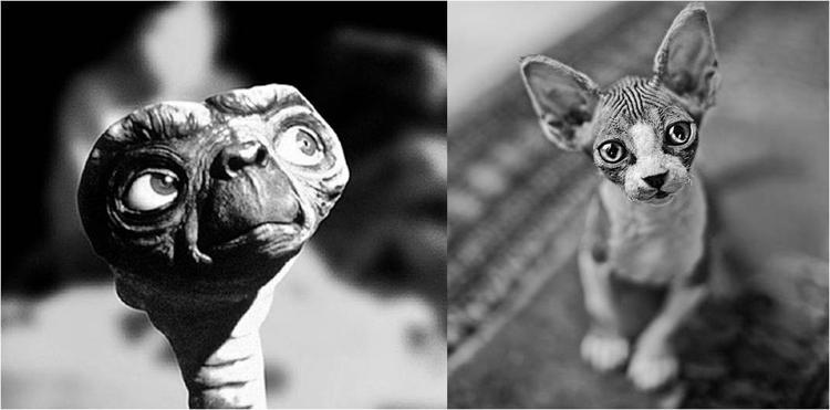gato_esfinge