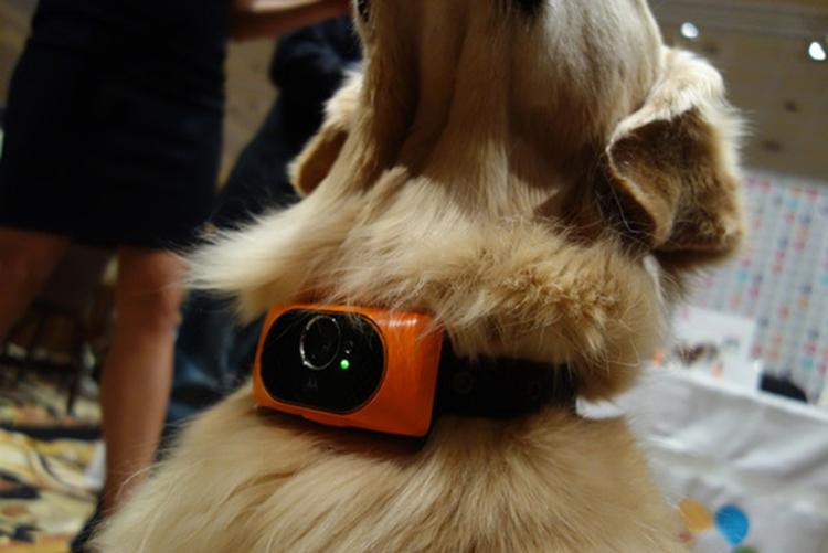 Smartphone_perros_Scout5000_1