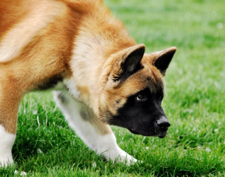 estrés_por_viaje_perro