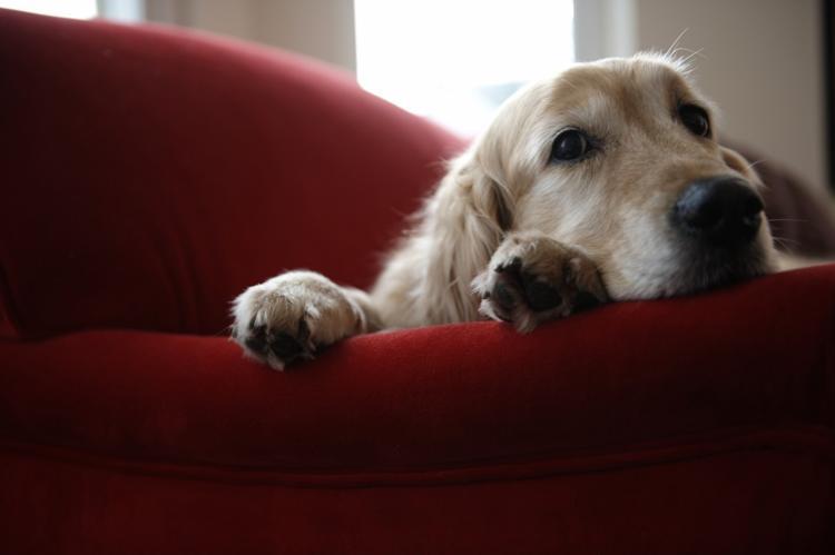 feromonas_adaptación_relax_para_perro