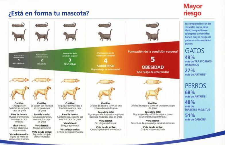 obesidad_mascotas8jpg