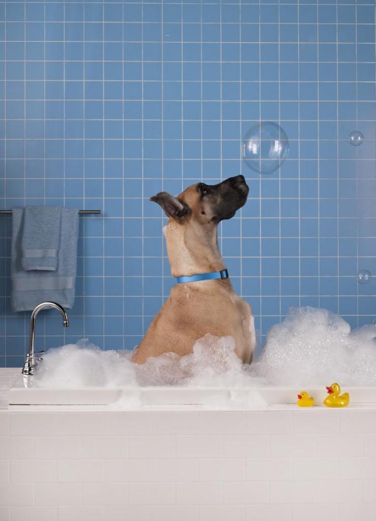 11_consejos_para_bañar_a_tu_perro