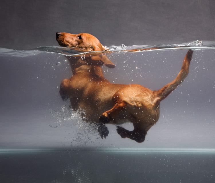 11_consejos_para_bañar_a_tu_perro6