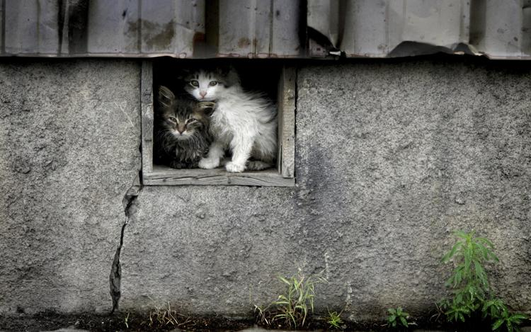 rescatar_gato_abandonado