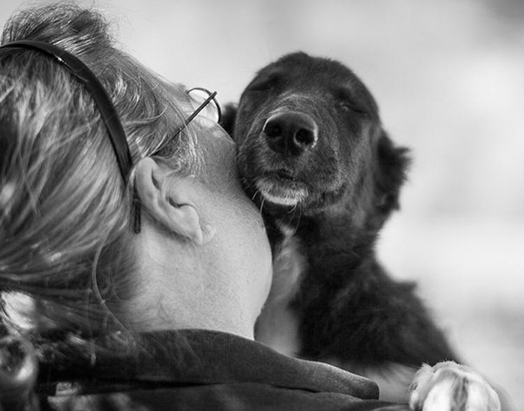 rescatar_perro_abandonado8