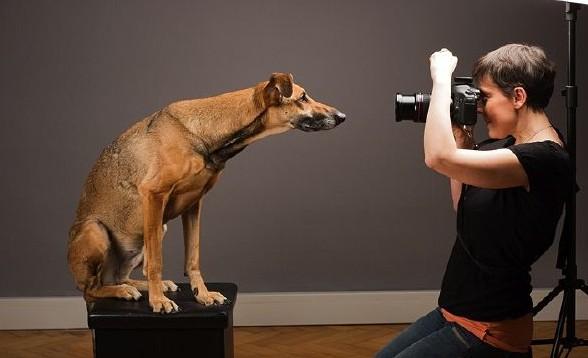 Profesiones_mascotas_fotografo_Petsonic