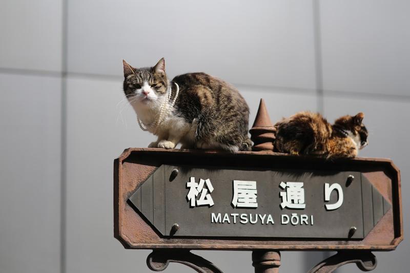 dia_nacional_del_gato_japon_petsonic_5