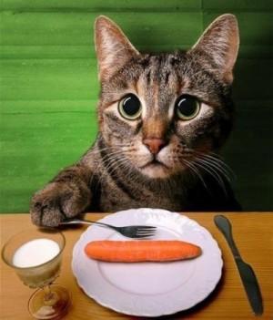dieta-barf-mascotas