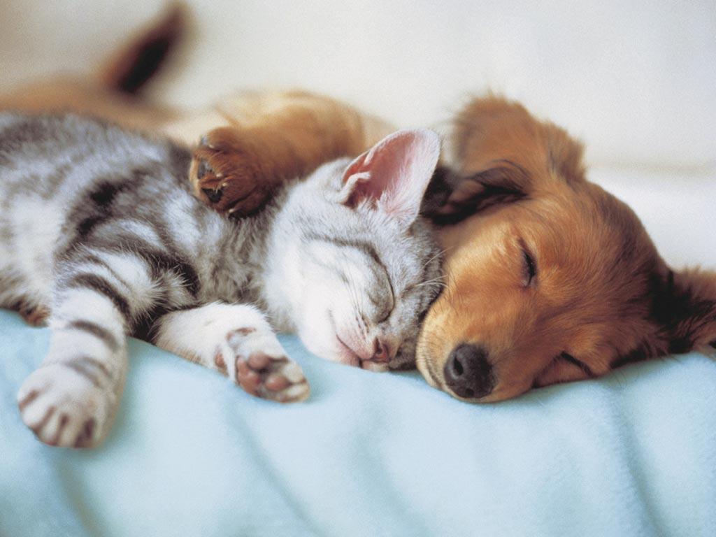 perro y gato durmiendo Petsonic