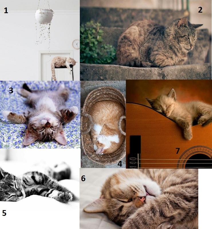 posicion duermen gatos Petsonic
