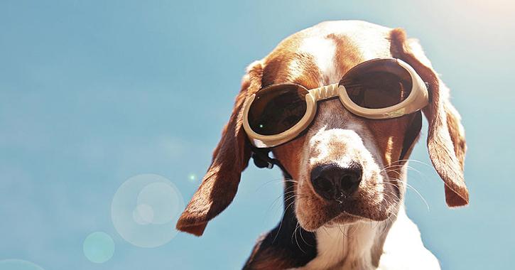 perro con gafas sol