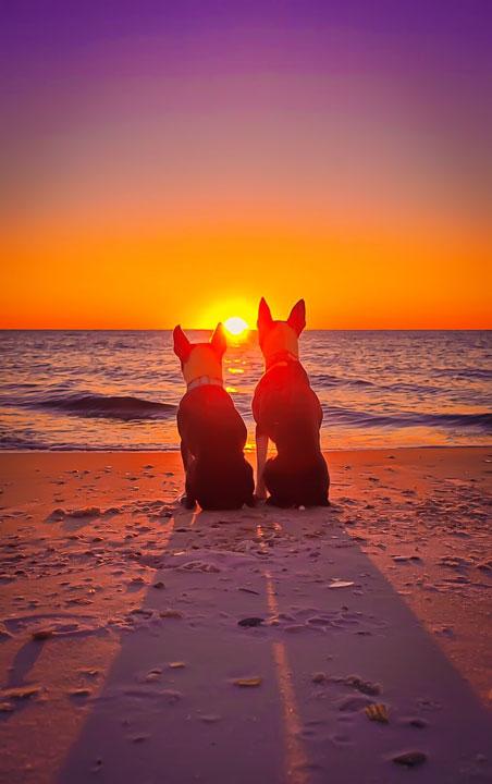 perros en playa