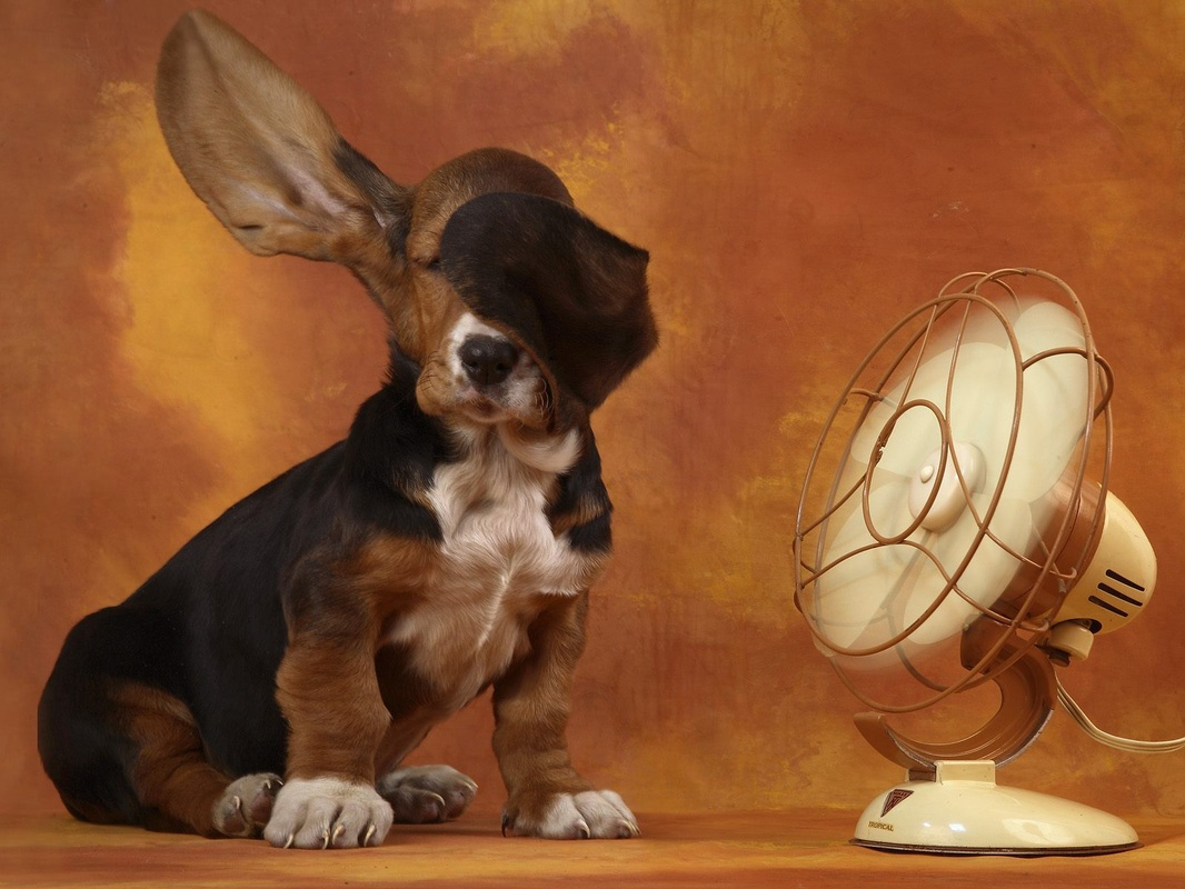 perros y calor