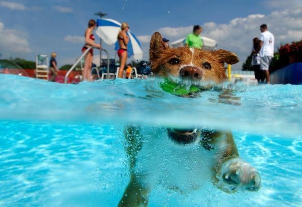 playas y piscinas para perros al agua mascotas