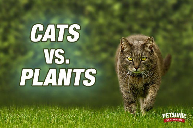 Plantas perjudiciales para tu gato Plantas seguras para gatos