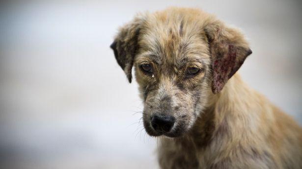 Resultado de imagen para maltrato a perros