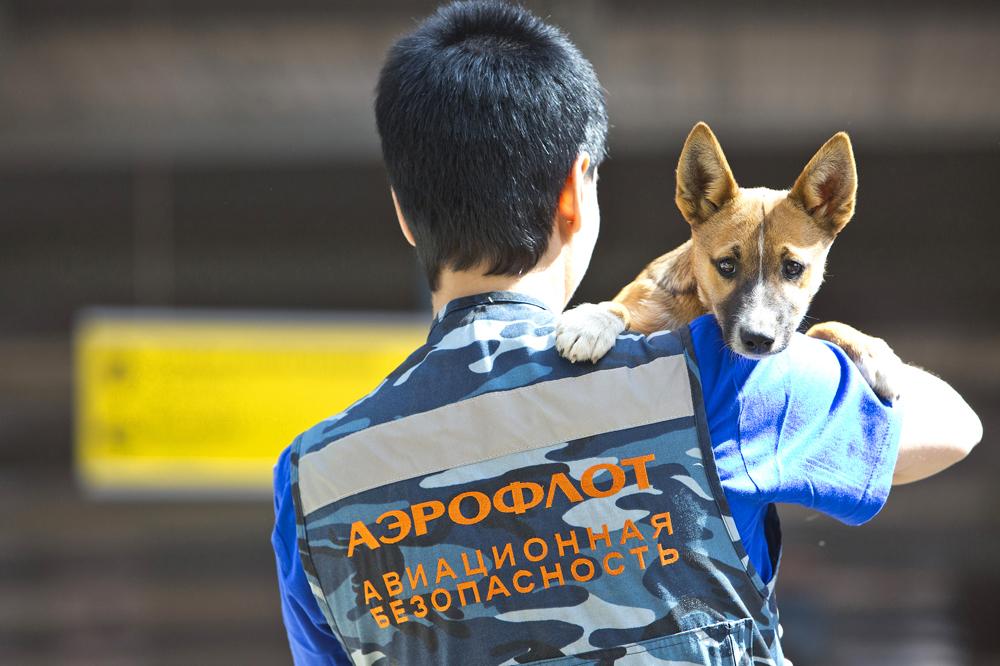 cachorro-sulinov