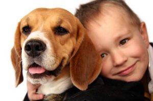 beagle y niños