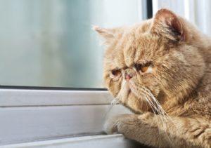 gato-mayor