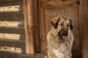 perro-con-alzheimer