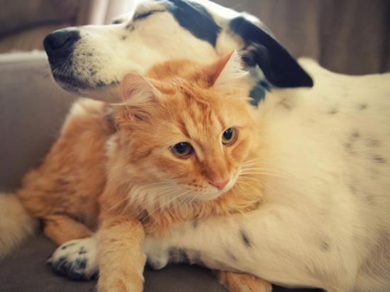 perro-y-gato-mayores
