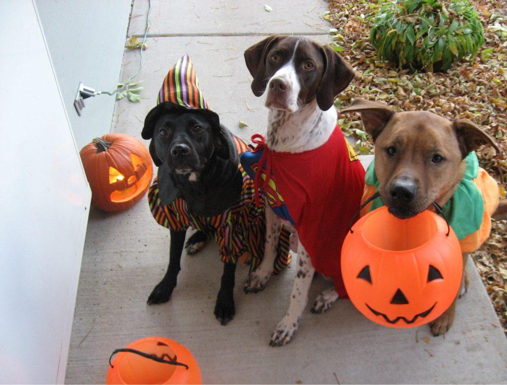 golosinas-toxicas-para-perros-halloween