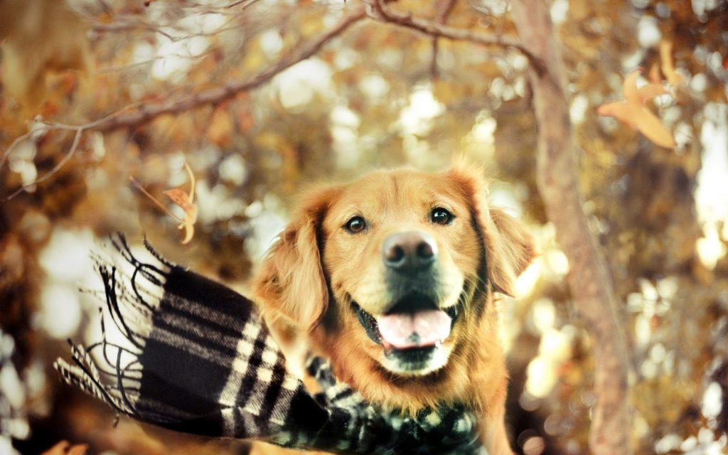 perro-bufanda