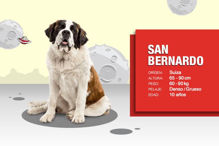san bernardo chat Chat san bernardo es un lugar para conocer gente de san bernardo y sus ciudades cercanas Únete y conoce gente de san bernardo y de todo chile.