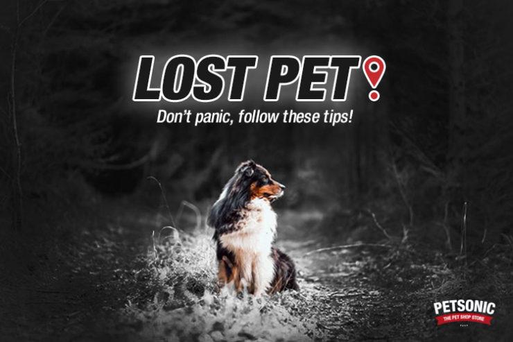 perro-perdido