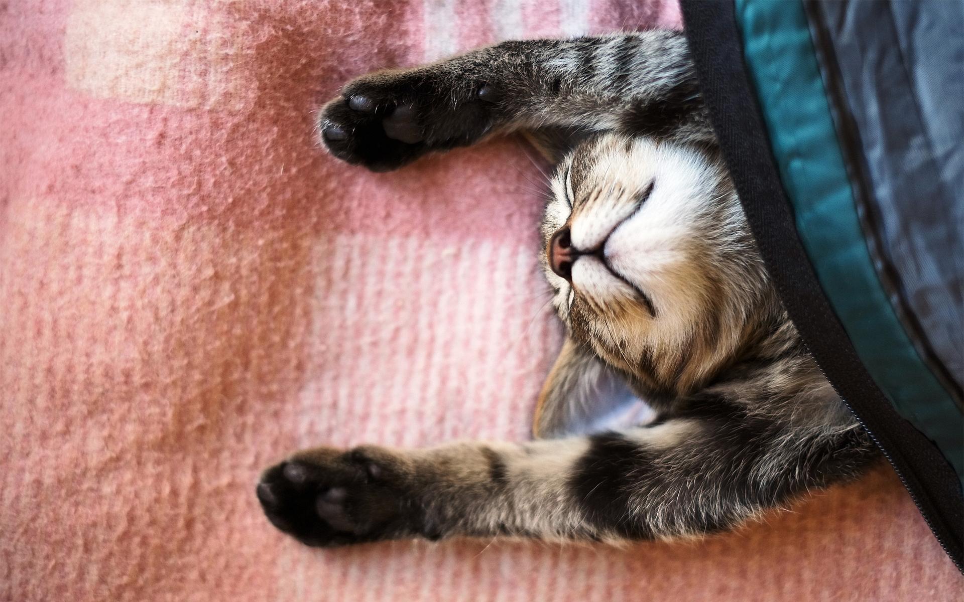 6979580-cute-cat-sleeping