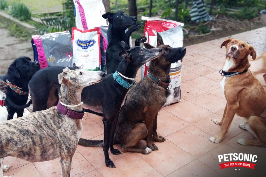 Perros de AlPerroVerde