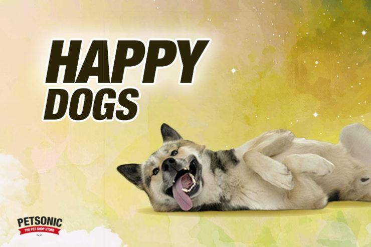 perros-feliz-de-verte