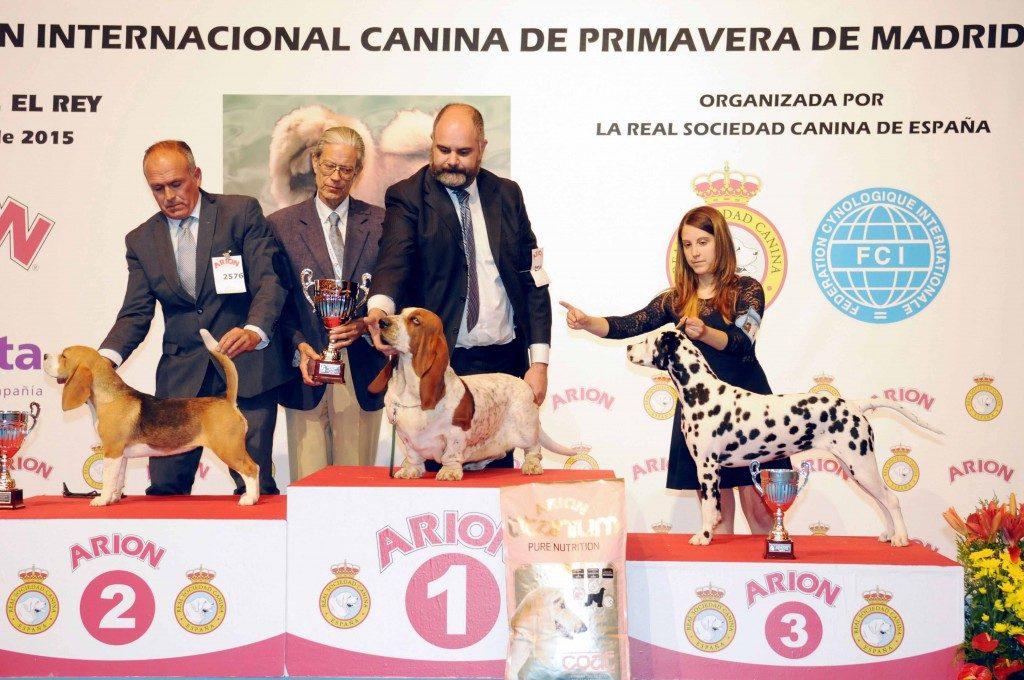 premios concurso belleza canina