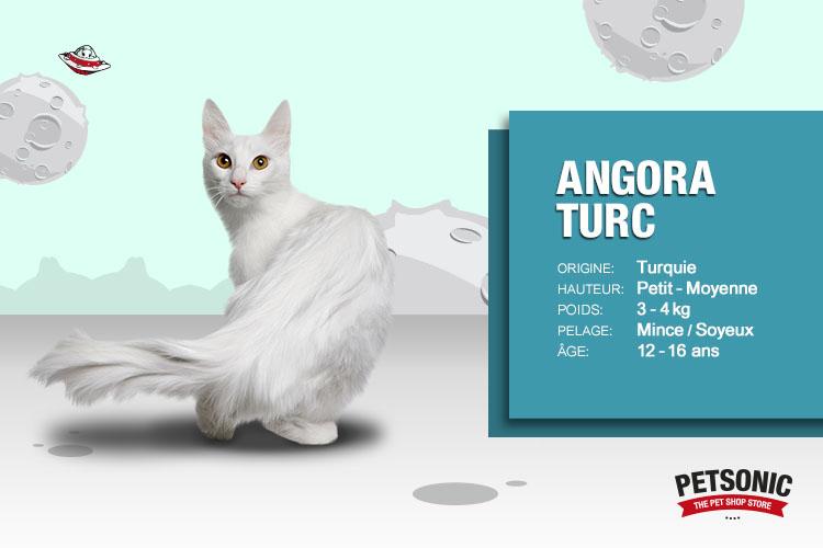 Petrace Chat Angora Turc Petsonic Blog