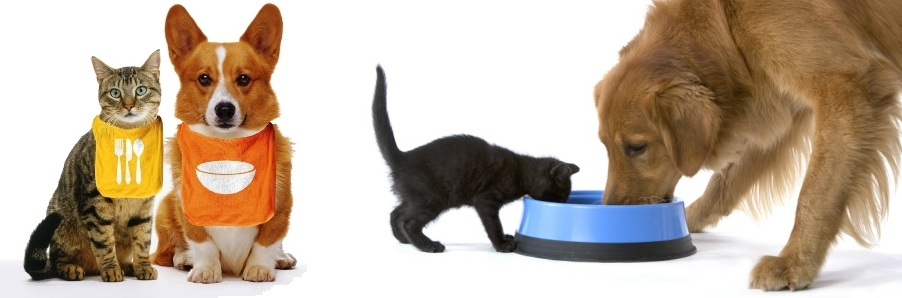 comida perro gato