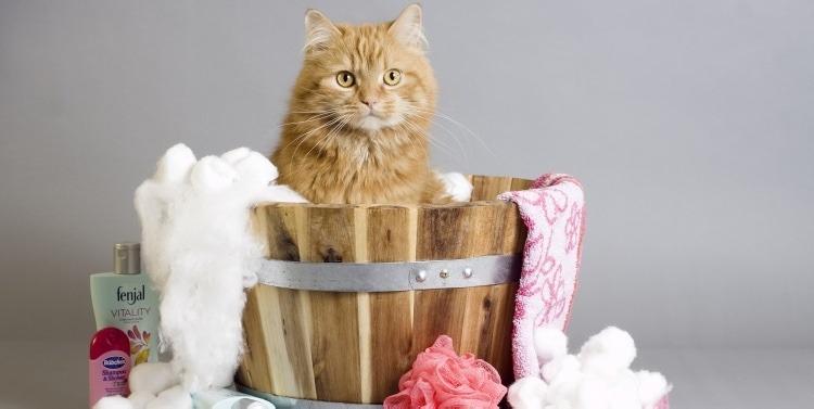 gato baño espuma
