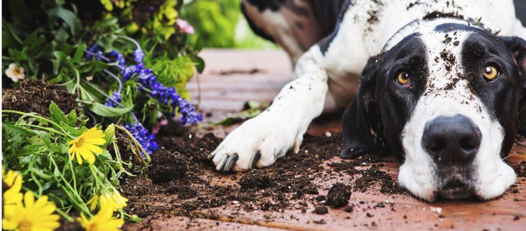 perro flores escarbar