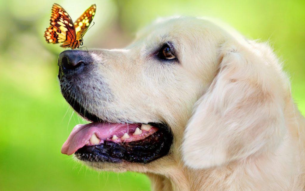 perro y primavera